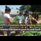 Inspiring urban farm teaches kids how to grow organic food on an NYC island