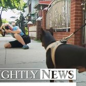 This Brooklyn Woman May Be A Dog's Best Friend | NBC Nightly News