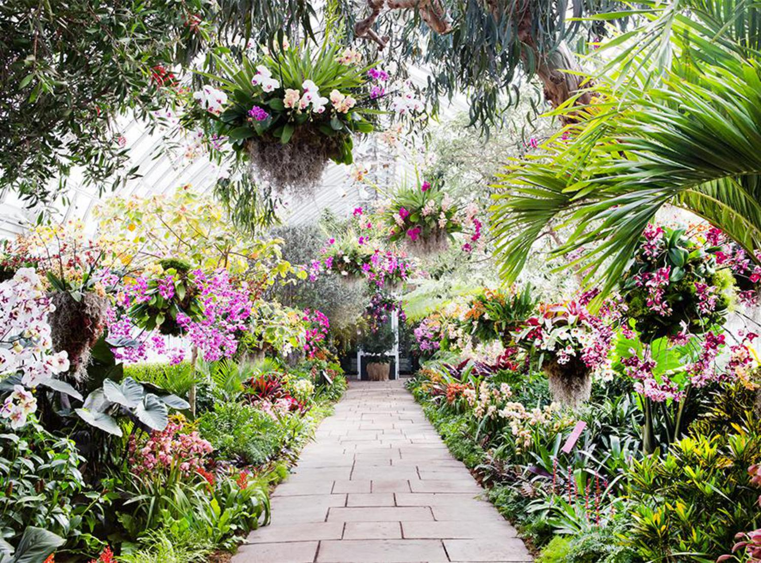 The show took two weeks to put together but months of cultivating to make sure the buds bloomed at the same time, said Marc Hachadourian, Director of Nolen Greenhouses for the New York Botanical Garden.
