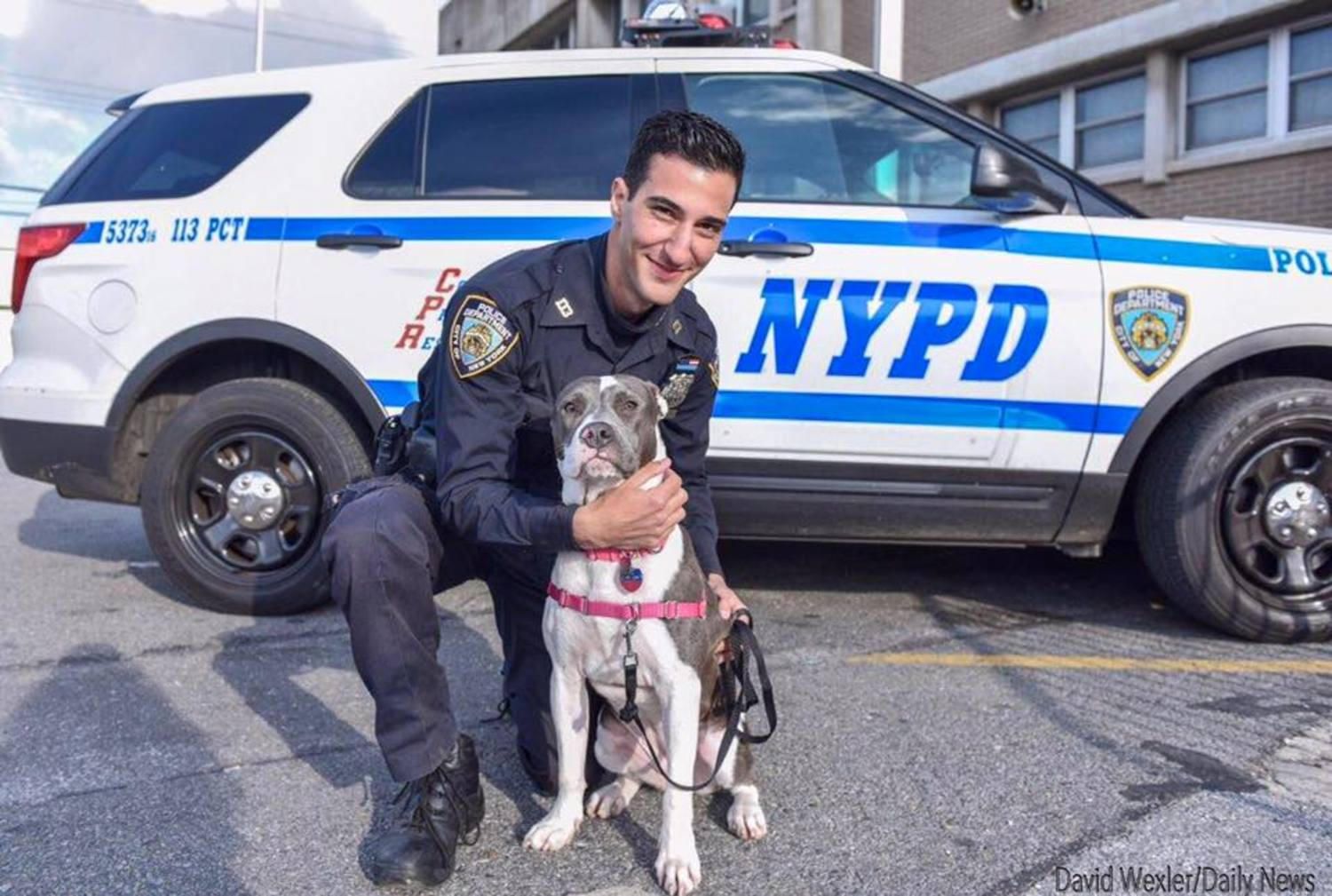 Queens Cop Adopts Pit Bull Puppy He Rescued From Abandoned Building