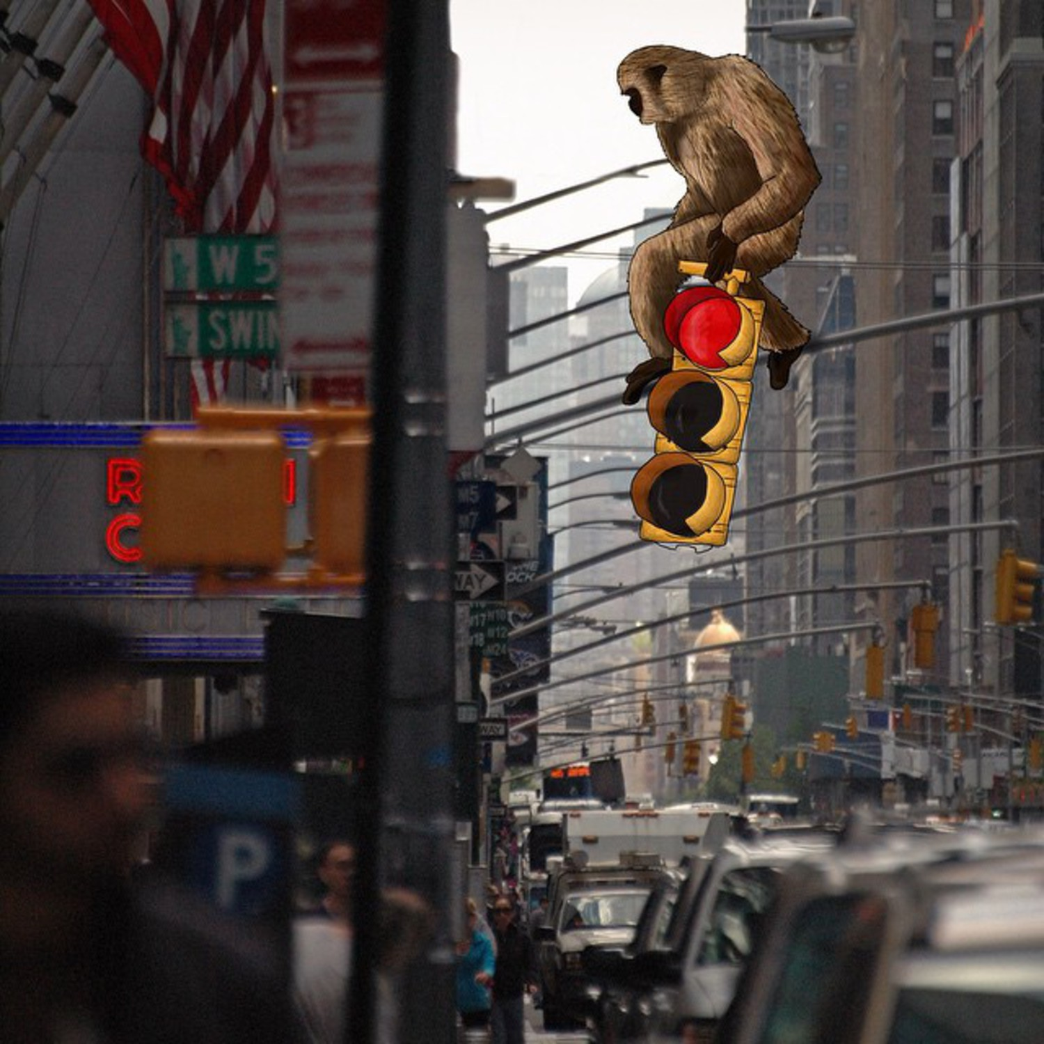 """That is my traffic light, capish ?"" 🐒🚦 Photo by @tosemjalinda 's daddy"