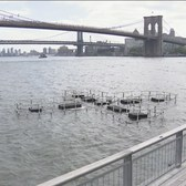 East River Art Informs Public About Water Quality