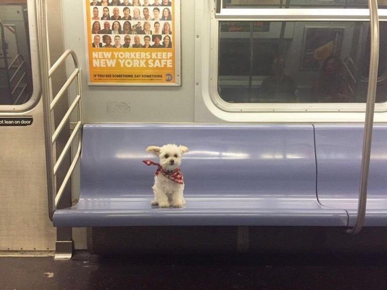 Taking the subway to doggyville