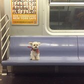 Taking the subway to doggyville
