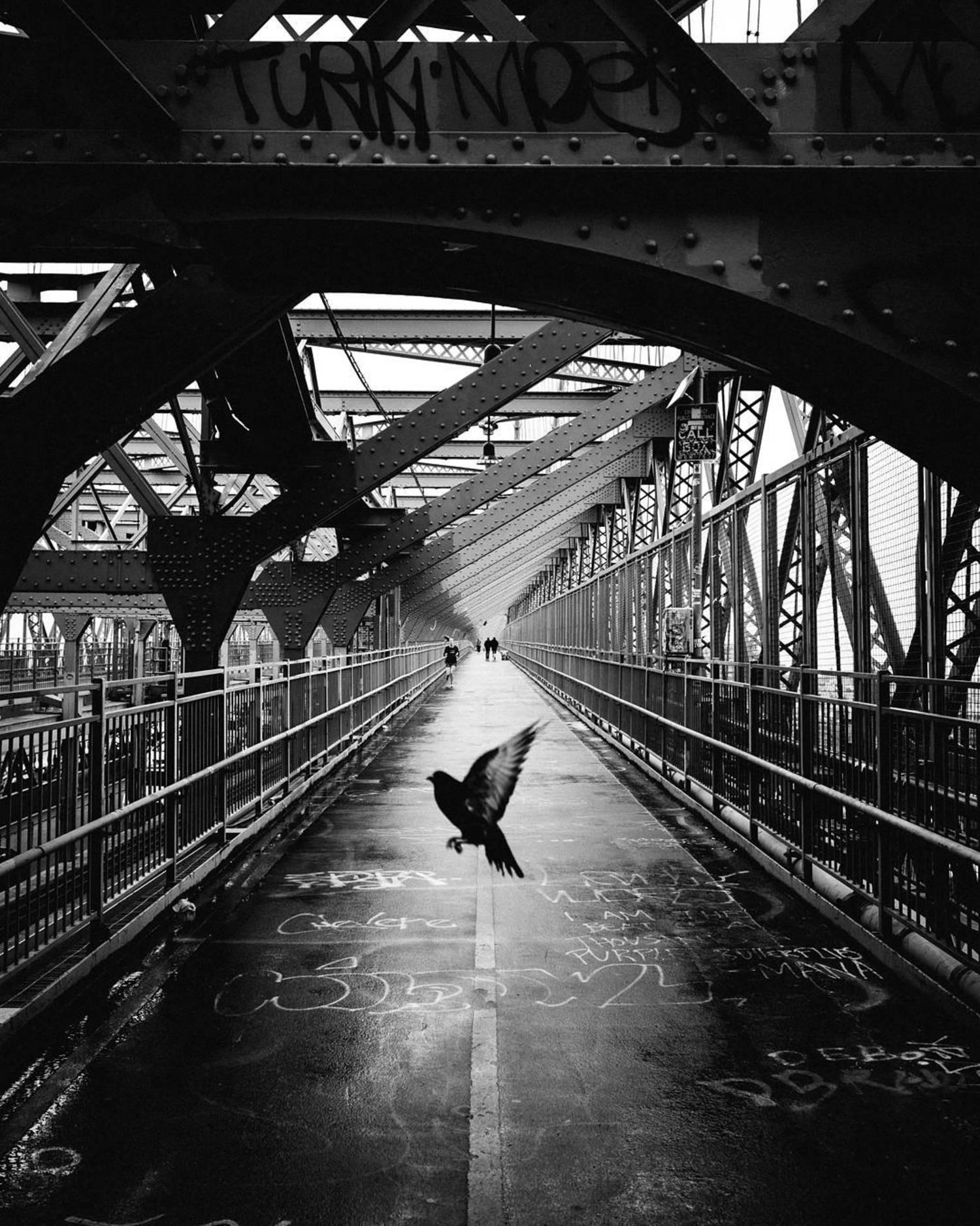 - Devine Intervention🕊️- #ILLest173  #blackandwhiteisworththefight #bnwwtf #nycp  #life_is_street #streetlife_award #streetleaks #suspectmag #streetcollectors #sber6 #Citykillerz  #streetmagazine #streetdreamsmag #nyc #symmetry #newyorkcity #streetphotography #street  #moodygrams #bnw_sundays #bnw_captures #lightroommasters #symmetrykillers #fox_bnw #estheticlabel #what_i_saw_in_nyc #canonusa #symmetricalmonsters #flockwithus #🐦