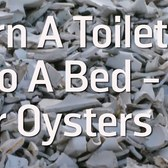 Turn A Toilet Into A Bed - For Oysters