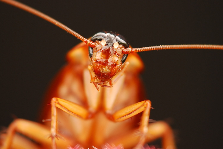 Cockroach!