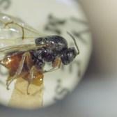 Shelf Life Episode 9 - Kinsey's Wasps