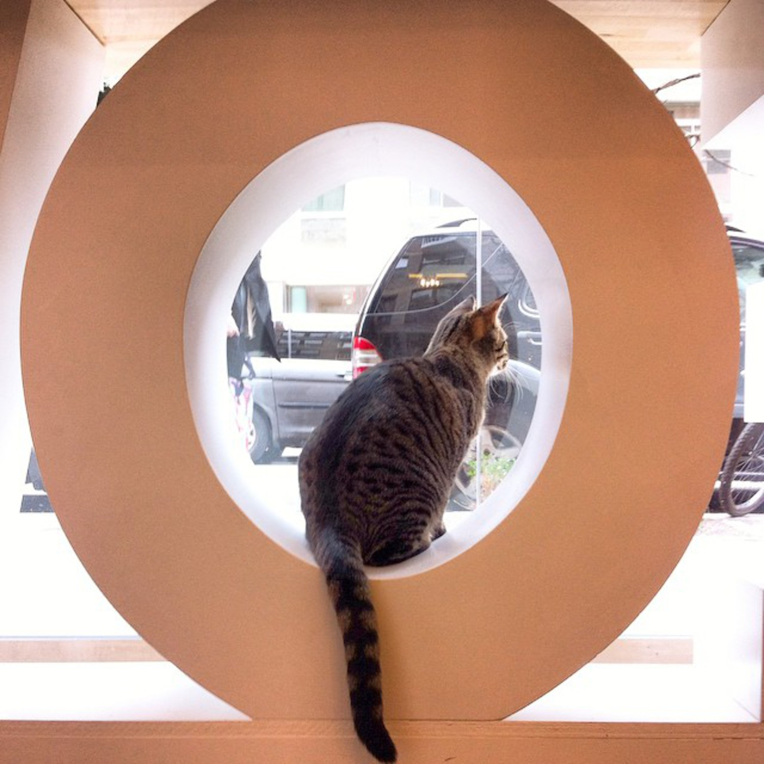 Kris is impatient to welcome our first customers tomorrow! Just a friendly reminder that due to overwhelming demand, we can only accept people who have made reservations. We will announce here when we are ready to start accepting walk-ins. Please keep checking our reservation page for last minute cancellations! #kittykind #catcafe #manhattan #nyc