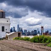 Brooklyn Grange Rooftop Farm