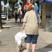 A man walking a dog and two parrots on 3rd Avenue, Bay Ridge, Brooklyn.