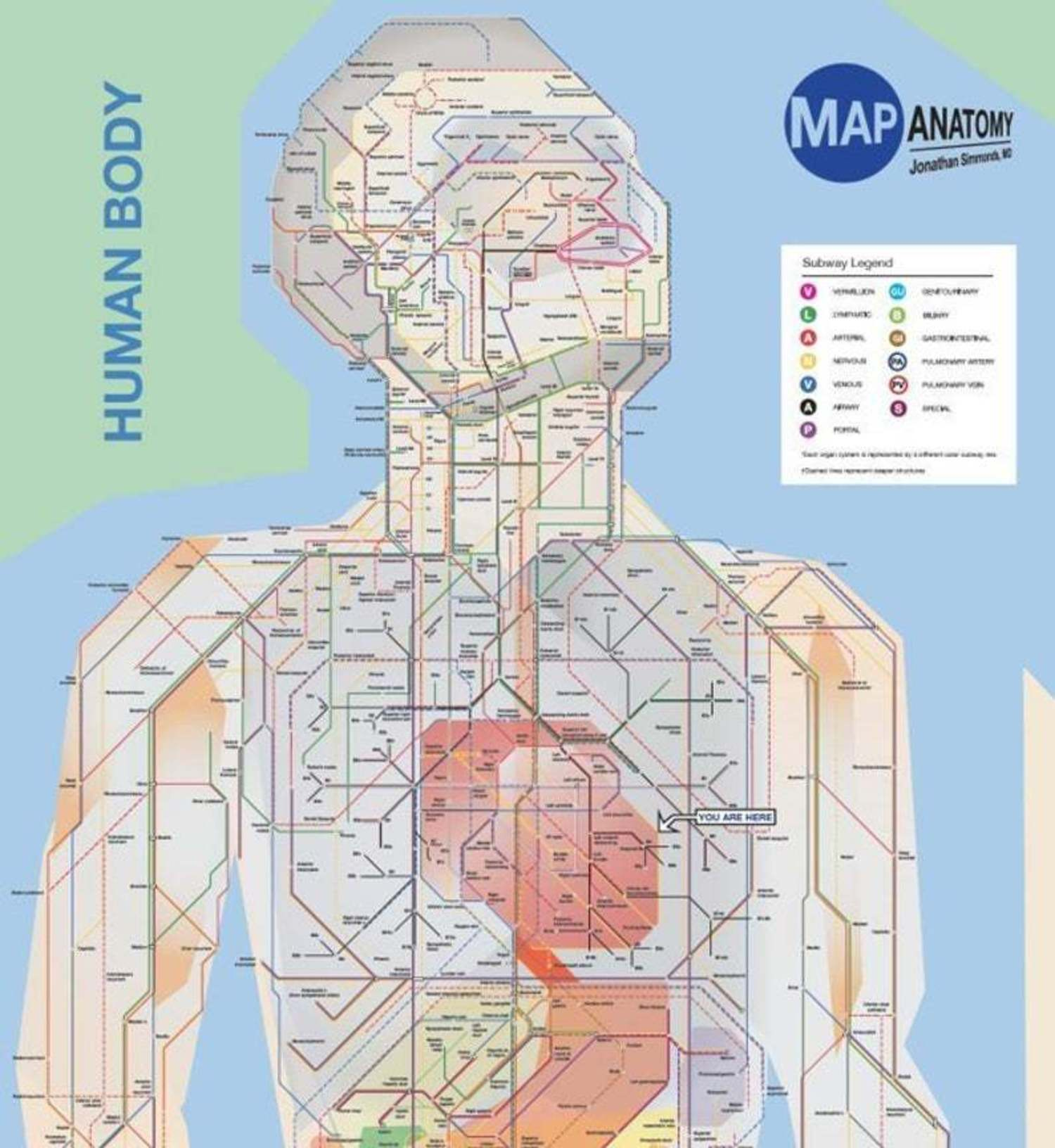 Poster - NYC style map of the entire human body (a schematic done in the style of the NYC subway)