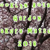 🌸 Sakura Matsuri 2018 at the Brooklyn Botanic Garden Compilation (Cosplays, Taiko Drums, Flowers!)
