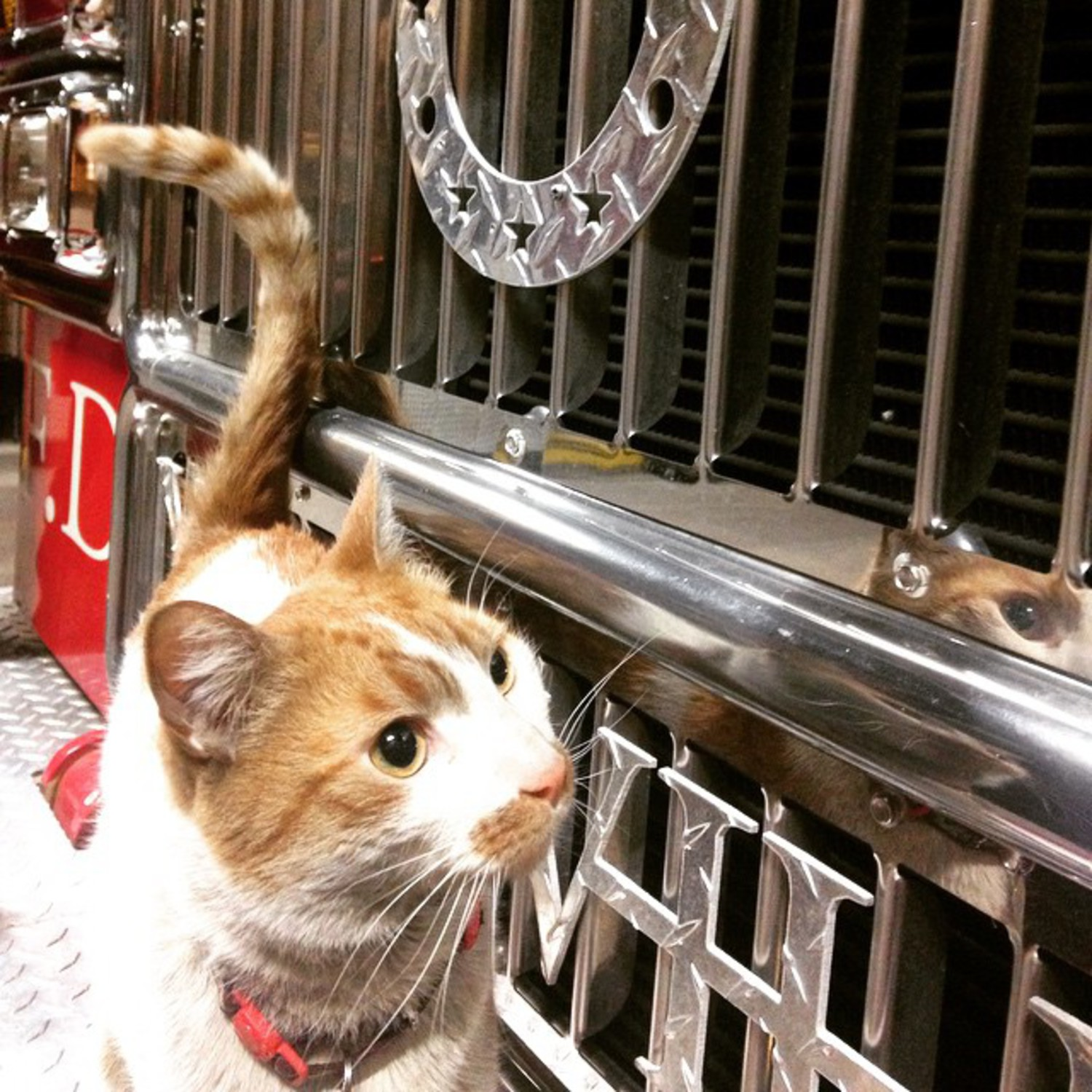I better see my whiskers in the reflection or these probies are going to have to deal with me. #morepolishing