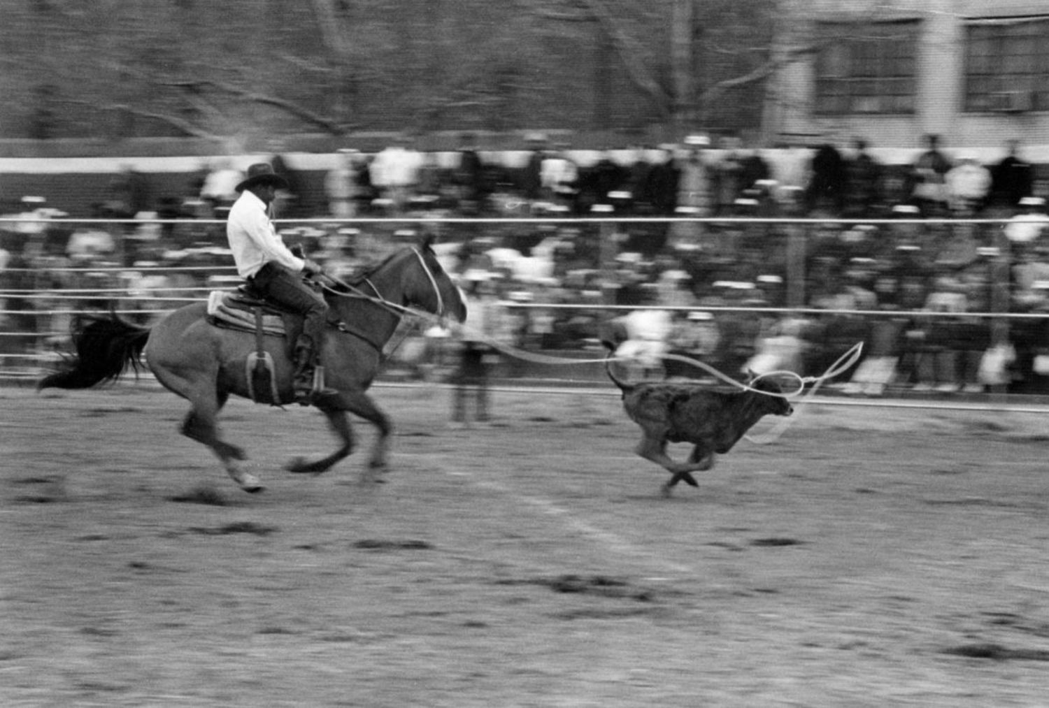 The Fifth Annual Black World Championship Rodeo, Colonel Charles Young Playground, New York, 1988.