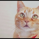 The 2nd Annual NY Cat Film Festival Trailer