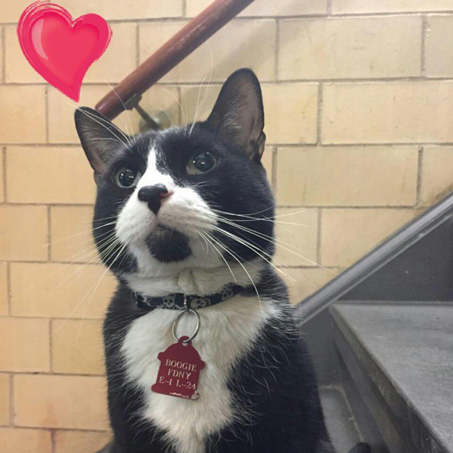 Thinkin about my boo. Happy Meowintines day 😘😍 ♥ #valentinesday #showsomelove #meowintinesday