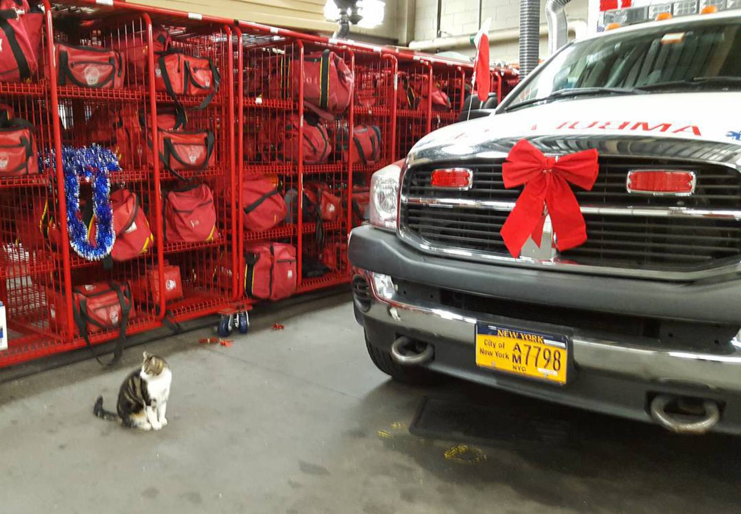 This gift-wrapped thing is really big and it doesn't smell like catnip. I hope it's for someone else. #itlookslikeregiftingtome #isthisreallyapresent #notforme  #ithinkithasabellthough #itsthethoughtthatcounts #holidayseason #ambulance #fdnyems #happyholidays #cats #catsofinstagram #meow #kitty #tabby #tabbycats #tabbiesofinstagram