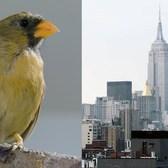 5 True Tales of Manhattan