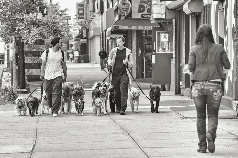 Dog Walkers, NYC