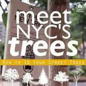 Meet NYC's Trees: Gingko
