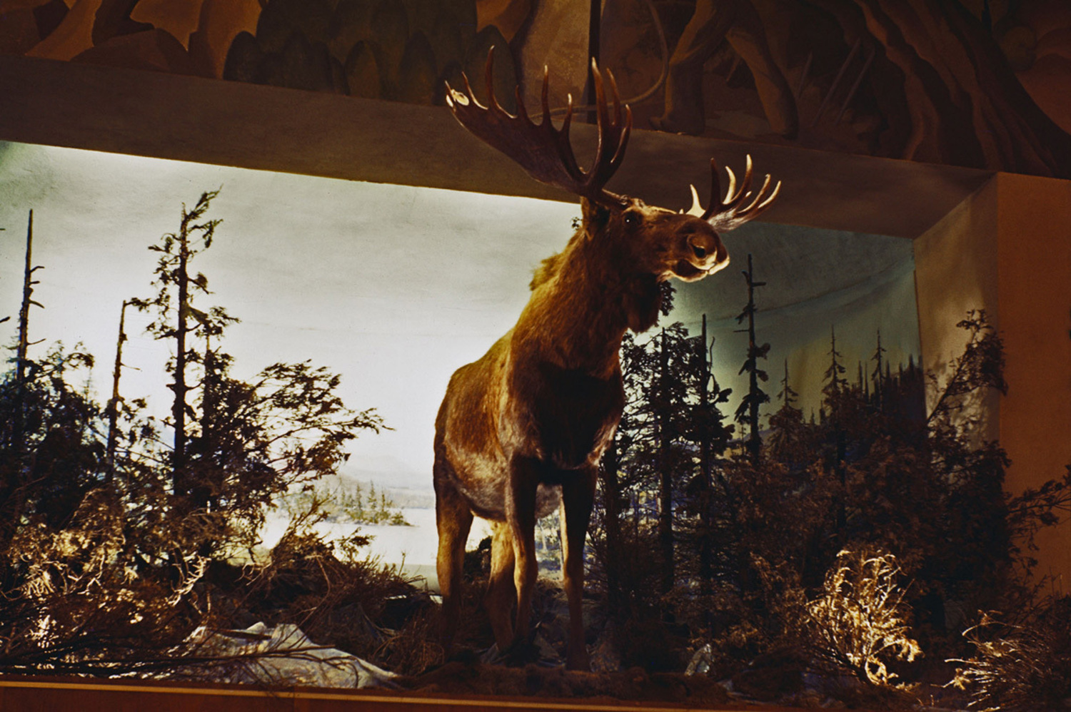 A stuffed moose in the Canadian Pavilion.