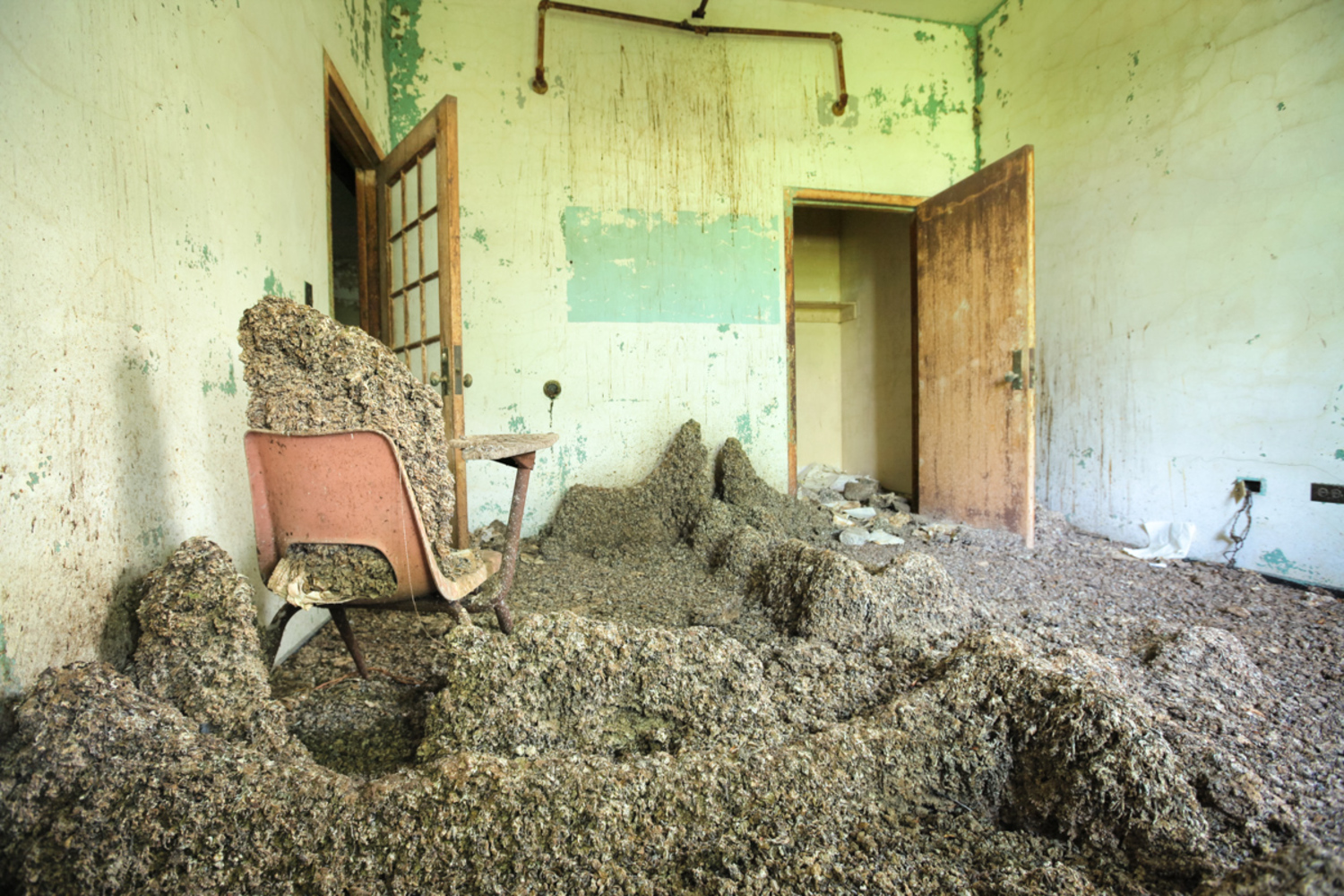 In Queens, a population of pigeons has inhabited an abandoned ward at Creedmoor State Hospital for decades. Dropping stalagmites accrue under popular roosts on the top floor.
