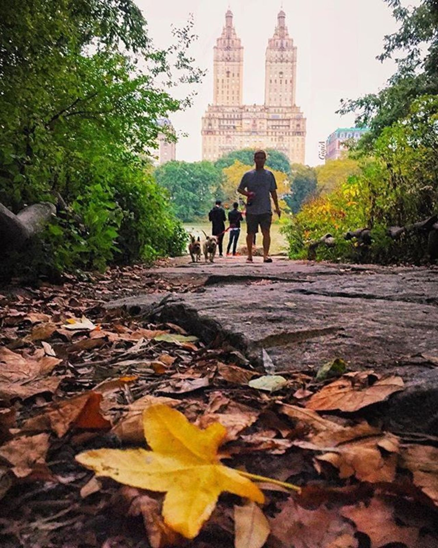 Central Park, New York. Photo via @gigi.nyc #viewingnyc #newyorkcity #newyork #nyc