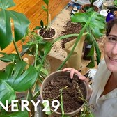 I Turned My NYC Apartment Into An Indoor Garden | 100 Things | Refinery29