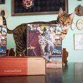 Feline promo