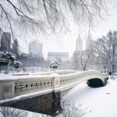 Photo via @travelinglens  Bow Bridge, Central Park  #viewingnyc