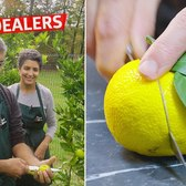 How Bhumi Growers Deals Yuzu and Rare Citrus to Michelin-Starred Restaurants — Vendors