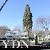 78-foot New York tree cut down for Rockefeller Center