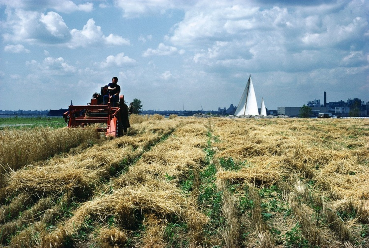 Harvest with sailboat