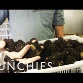 Meet New York's Youngest Truffle Dealer: Day with the Dealer