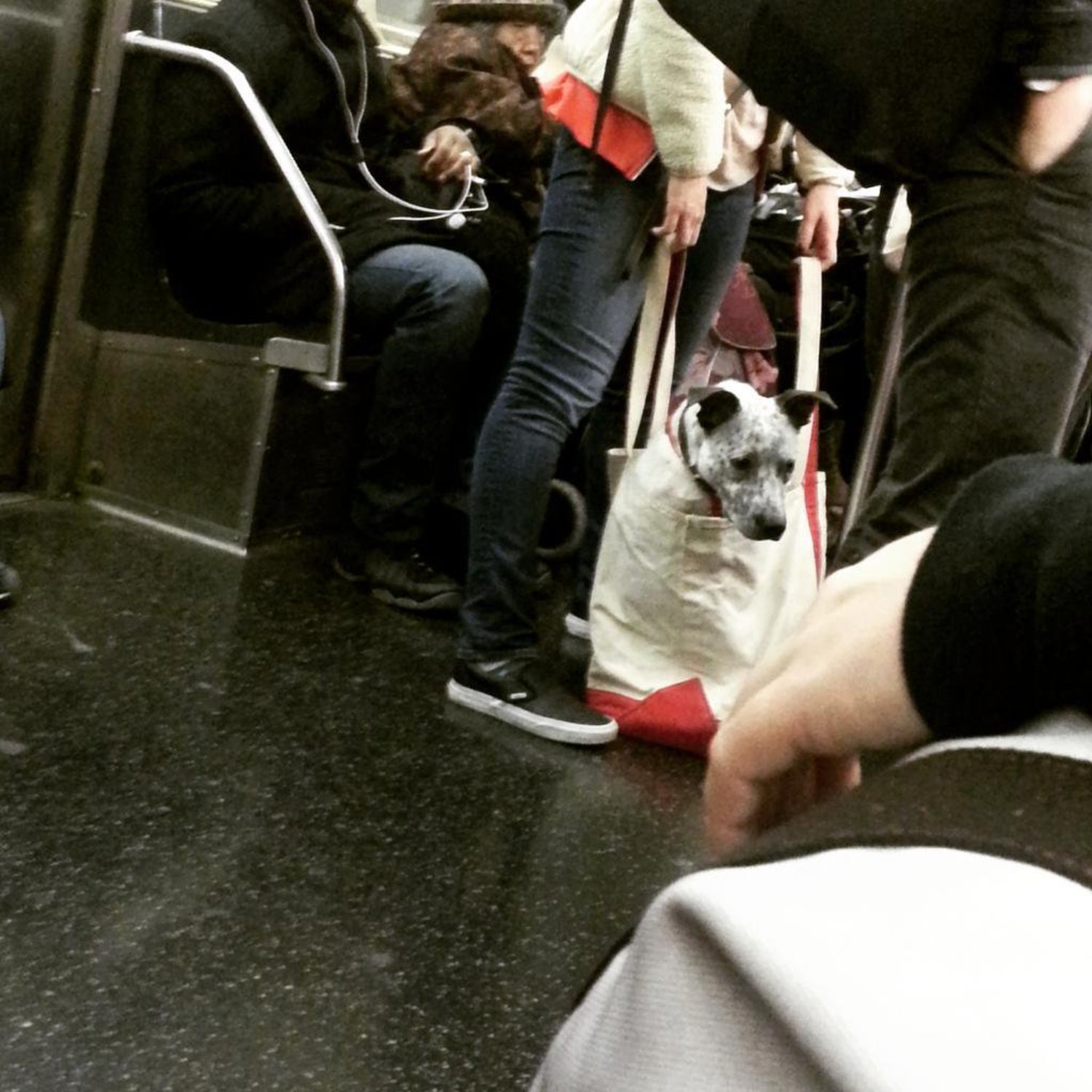 I should start a collection of ways people transport their dogs on the subway. #1: Large dog in tote bag http://t.co/2lWxQdhynO
