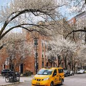 Spring in the West Village, Manhattan