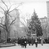 104 years ago, the nation's first public Christmas tree went up in Madison Square Park