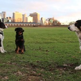 Meet The Working Dogs of Governors Island