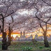 Central Park, New York, New York. Photo via @nyclovesnyc #viewingnyc #newyork #newyorkcity #nyc #centralpark