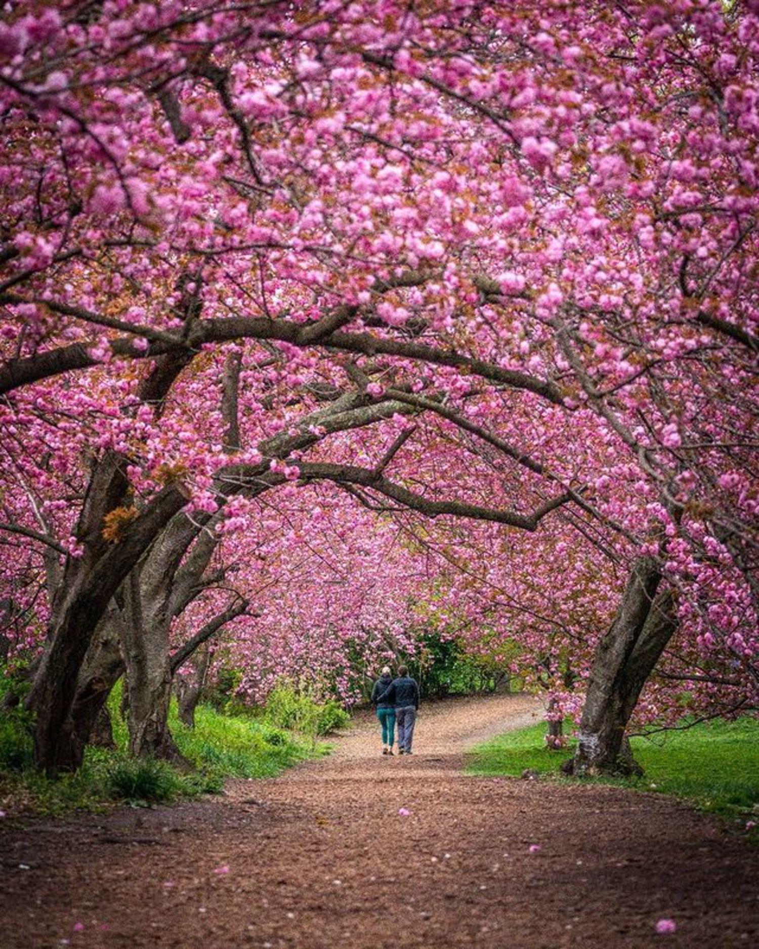 Spring in Central Park, Manhattan