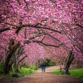 Spring in Central Park, Manhattan