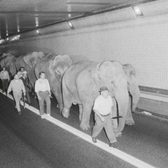 46 years ago, a herd of circus animals trekked through the Lincoln Tunnel