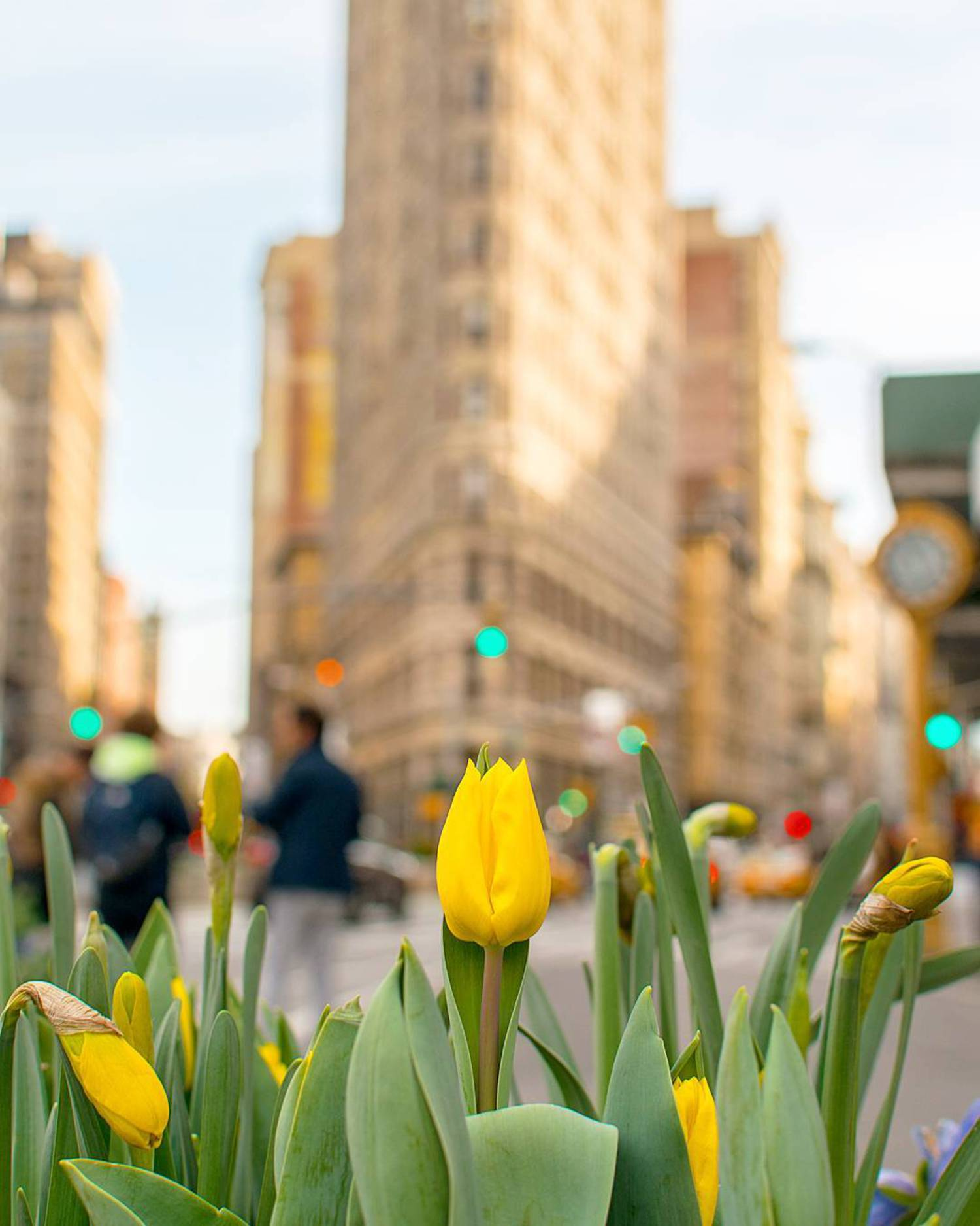 Spring is the season of change. Don't be fooled today!  _ #flatironbuilding #wonderful_places #global_hotshotz #igpodium #topnewyorkphoto #nikonnofilter #igshotz #clickgeardaily #thebest_capture #jaw_dropping_shots #folkcreative #nycprimeshot #igglobalclub #globalcapture #igbest_shotz #newyork_instagram #ig_worldclub #livetravelchannel #photosergereview #awesomeglobe #travelawesome #earthpixco #awesomepix #icapture_nyc #nyloveyou