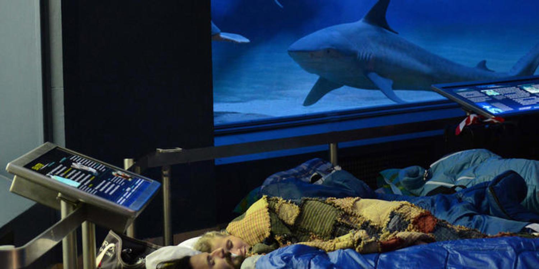 AMNH Sleepovers For Grown-Ups