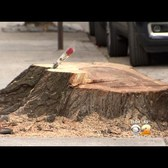 CBS2 Exclusive: Tensions Flare As Workers Cut Down Tree