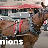 The Life of a New York City Carriage Horse | Op-Ed | NowThis