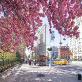 Spring in Flatiron District, Manhattan