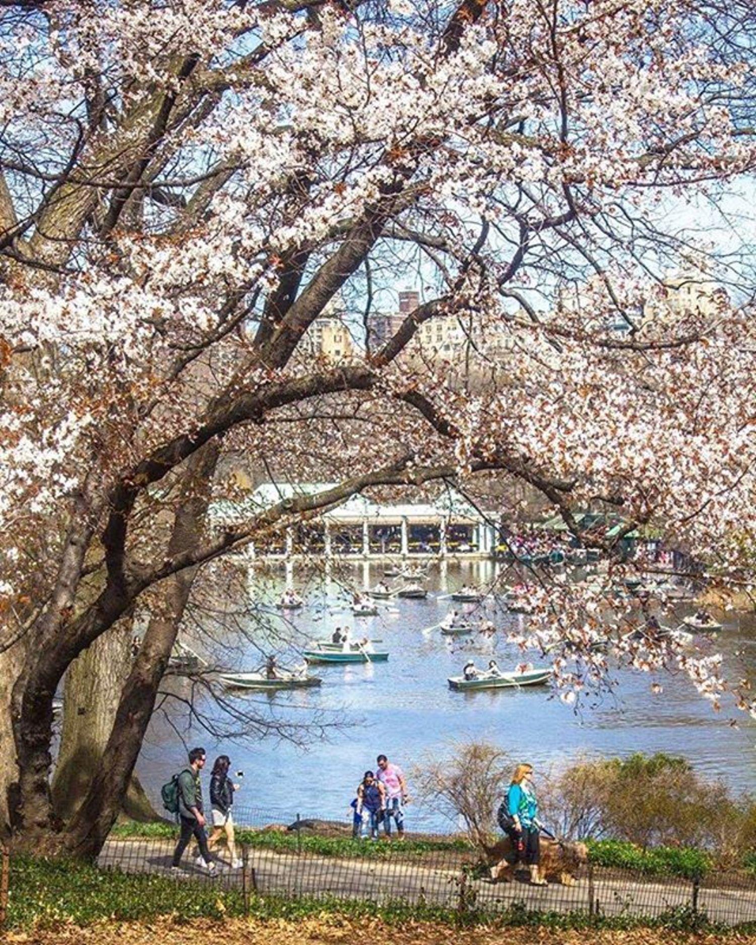Central Park Lake. Photo via @newyorkcitykopp #viewingnyc