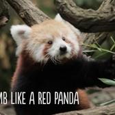 Nature Trek | Bronx Zoo